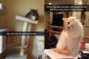 12 Tingkah lucu kucing tertangkap snapchat pemiliknya ini bikin ngakak