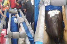 Pengangkutan lumba-lumba jadi viral, ini penjelasan Sriwijaya Air