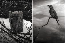 9 Foto ini tunjukkan ganasnya Danau Natron, hewan bisa jadi batu