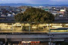 Pohon usia 700 tahun dibiarkan tumbuh di tengah stasiun, ini alasannya