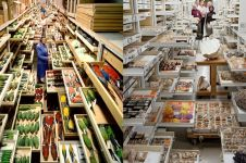 11 Foto koleksi The National Museum of Natural History ini memukau