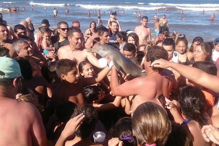 Lumba-lumba langka ini mati setelah dipaksa berfoto selfie di daratan
