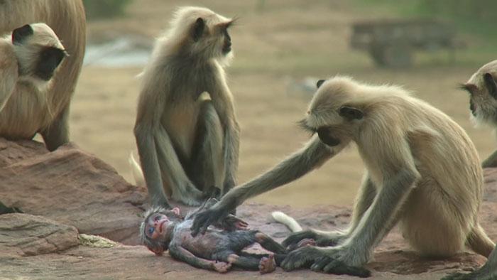 Ekspresi monyet kehilangan temannya ini bikin banyak orang menangis