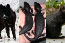 10 Hewan langka berwarna hitam pekat ini tak disangka ada di dunia