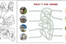 10 Ide permainan melacak jalur ini cocok untuk latih kecerdasan anak