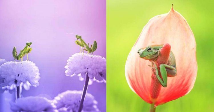 15 Foto hewan dengan habitat alamnya ini mengagumkan, bikin sejuk mata