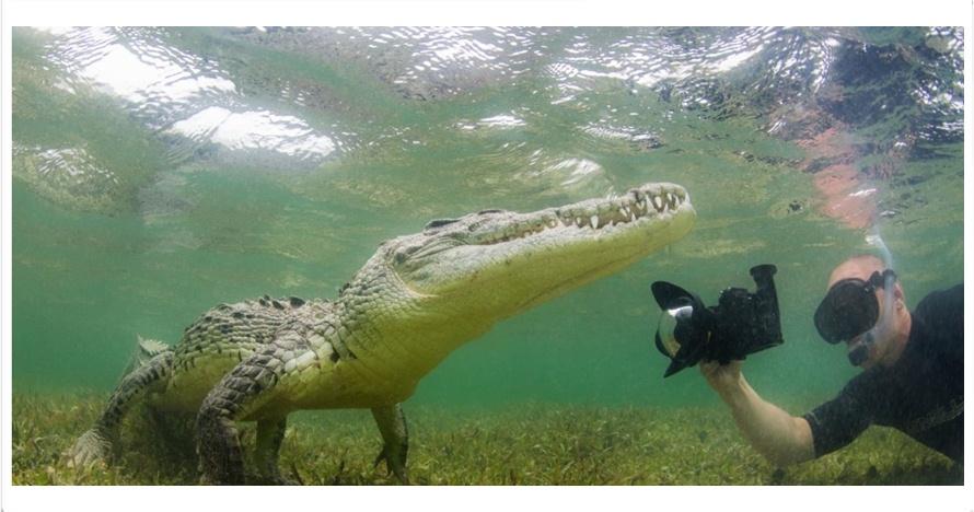 Fotografer ini ambil foto buaya close up dalam air, berani banget sih