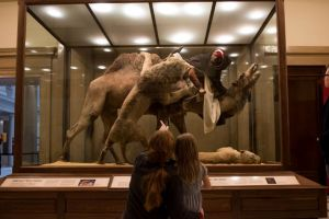Para ilmuwan dikejutkan dengan diorama manusia umur 150 tahun ini