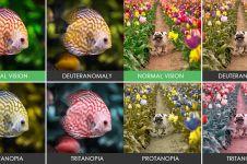 16 Foto perbedaan benda jika dilihat dengan mata normal dan buta warna