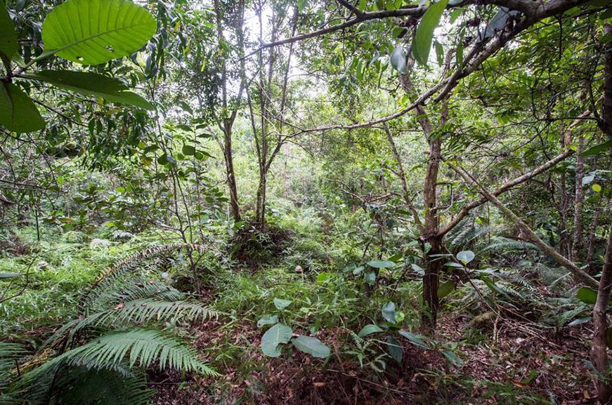 Bisakah kamu temukan 12 tentara yang sedang menyamar di hutan ini?