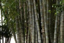 5 Tanaman langka di Jogja ini berhasil dilestarikan, ada bambu tutul