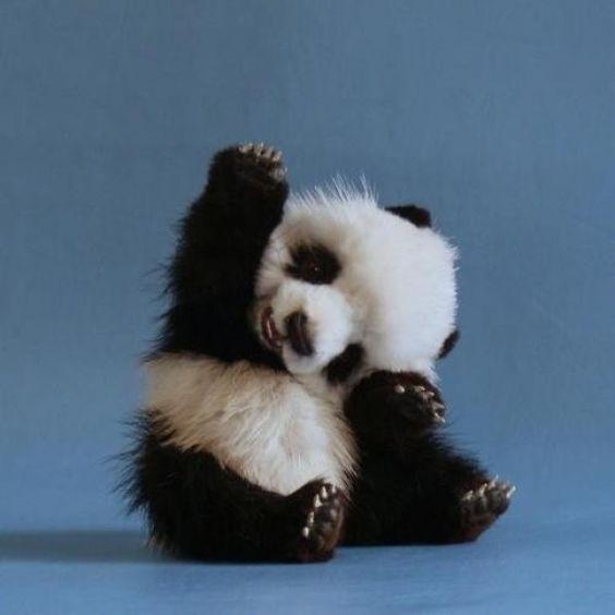 587910 bayi panda