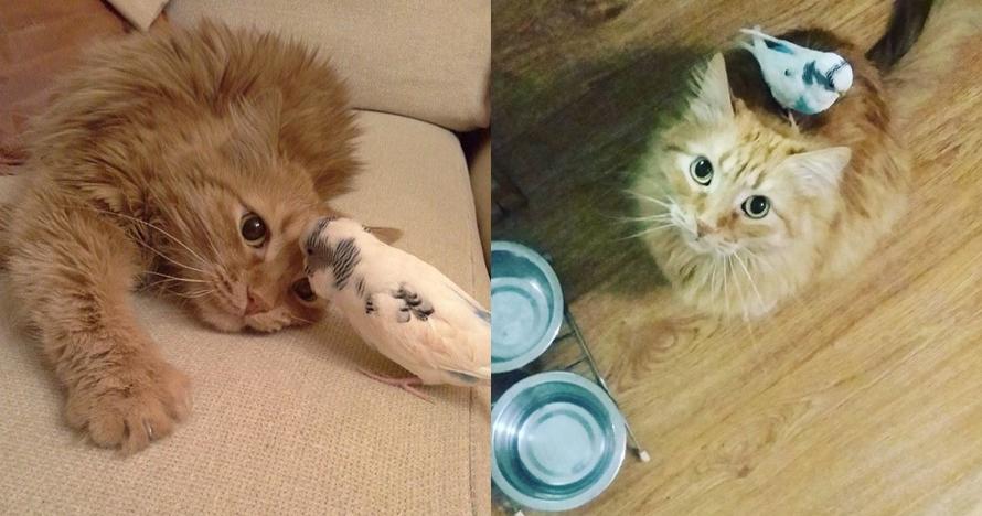 10 Video tingkah kucing dan burung ini friendship goals banget, gemes!