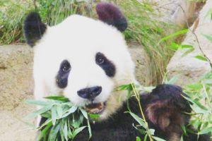 Panda bikin restoran ini untung sampai Rp 1 triliun, kok bisa ya?