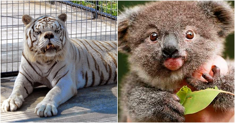 Nggak cuma manusia, 10 hewan ini juga idap down syndrome