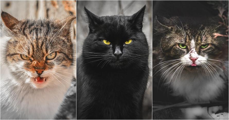 11 Foto warna mata kucing ini bikin takjub, dari oranye sampai hijau