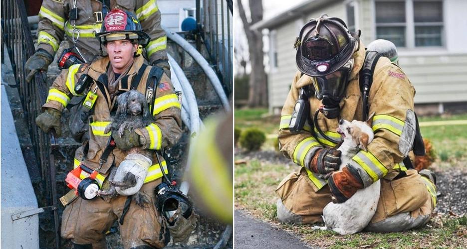 13 Potret heroik saat pemadam kebakaran selamatkan hewan