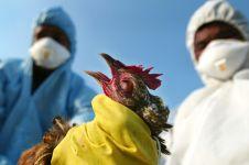 2 Kasus flu burung terjadi di Cirebon, kenali gejala-gejalanya yuk