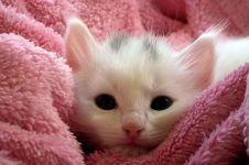 Parfum ini beri sensasi wangi leher anak kucing, baunya kayak apa ya?