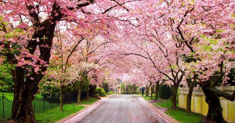 selain jepang ini 14 tempat terbaik untuk melihat bunga