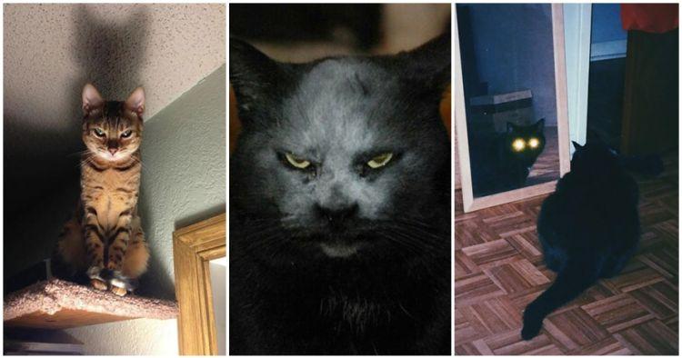 Nggak Mesti Lucu Ini 18 Potret Seram Wajah Kucing Yang