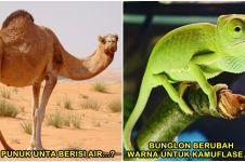 Awas ketipu, 7 fakta tentang hewan ini ternyata cuma mitos lho