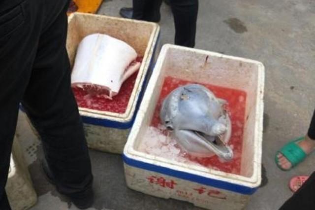 Heboh, lumba-lumba dipotong-potong dan dimasukin kotak es