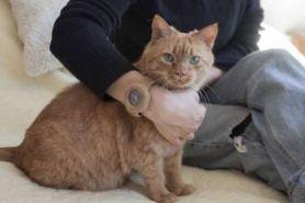 Unik, jam tangan ini dibuat khusus untuk para pecinta hewan