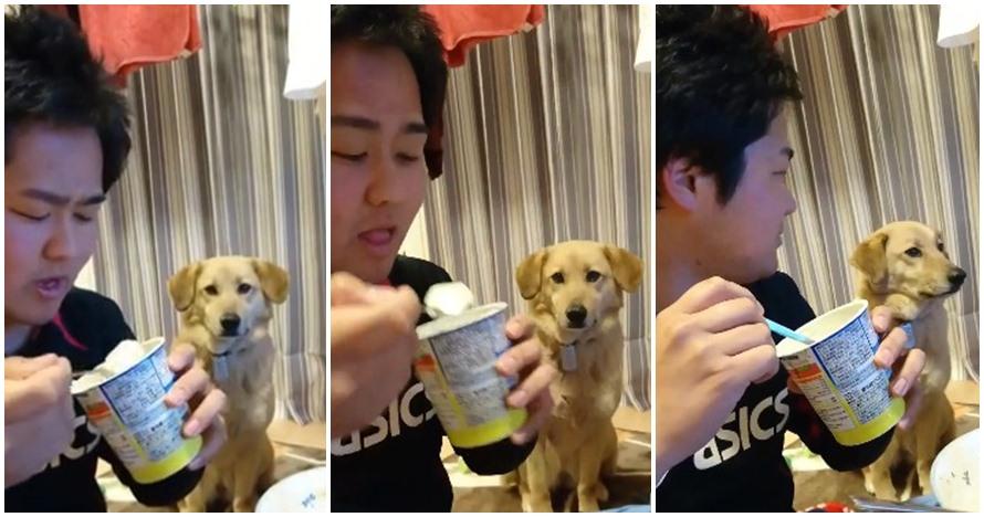 Video anjing mupeng makanan tapi gengsi ini bikin gemes juga kasihan