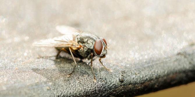 Bahaya lalat nempel di makanan, jangan dimakan & harus segera dibuang!