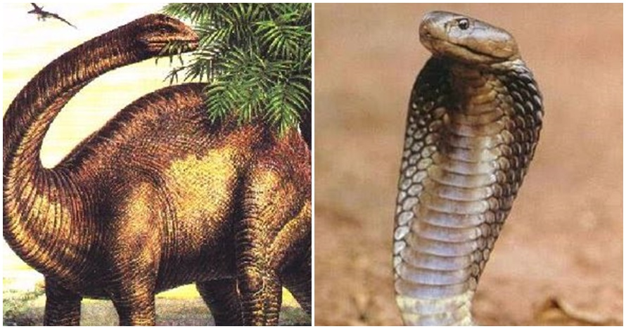 Cocoklogi asal-usul ular kobra dan dinosaurus ini ngocolnya kebangetan
