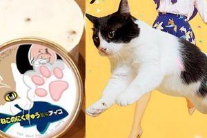 Wow kini ada es krim rasa telapak kaki kucing dan anjing, berani coba?