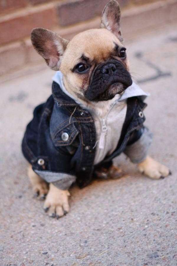 Kocak! Ini yang Terjadi Ketika Anjing Telah Kenal Fashion – nulis