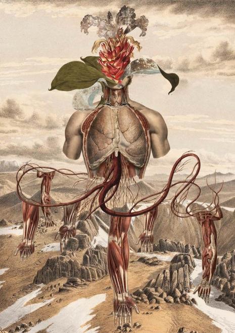 Anatomi Surealis  © 2017 Dangerous Mind