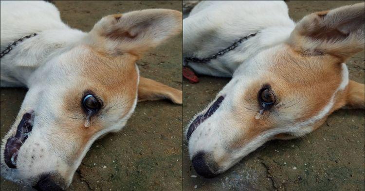 Anjing diracun pencuri yang kesal aksinya gagal, nangis sebelum mati