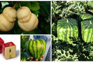 Selain sehat, buah dibentuk nyeleneh ternyata tingkatkan nafsu makan