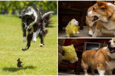 16 Potret anjing saat ketakutan ini kasihan tapi kocak