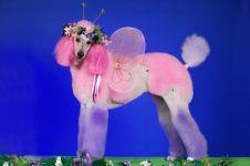 15 Potret saat anjing ikut kontes kecantikan, makin gaya dan lucu nih?
