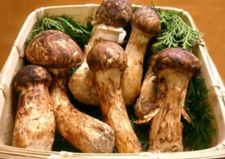 Ini kelebihan memanggang jamur daripada menumis atau merebusnya