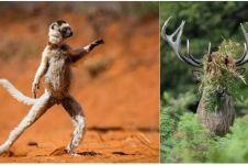 12 Foto hewan ini diambil pada momen yang tepat, hasilnya kocak
