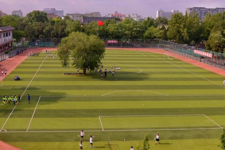 Pohon usia 100 tahun ini dibiarkan hidup di tengah lapangan sepak bola