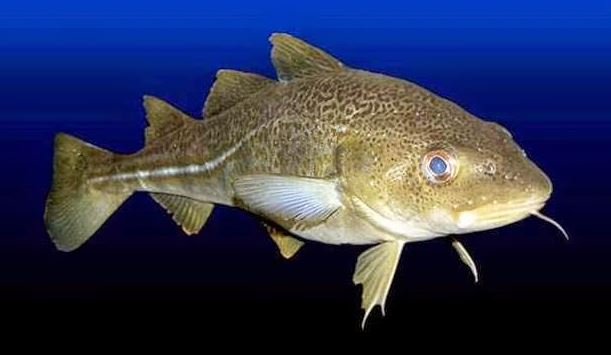 3 Jenis ikan ini sebaiknya jangan kamu konsumsi, alasannya apa ya?