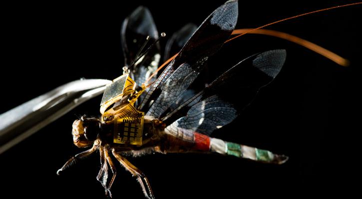 DragonflEye, ketika capung hidup dimodifikasi jadi drone