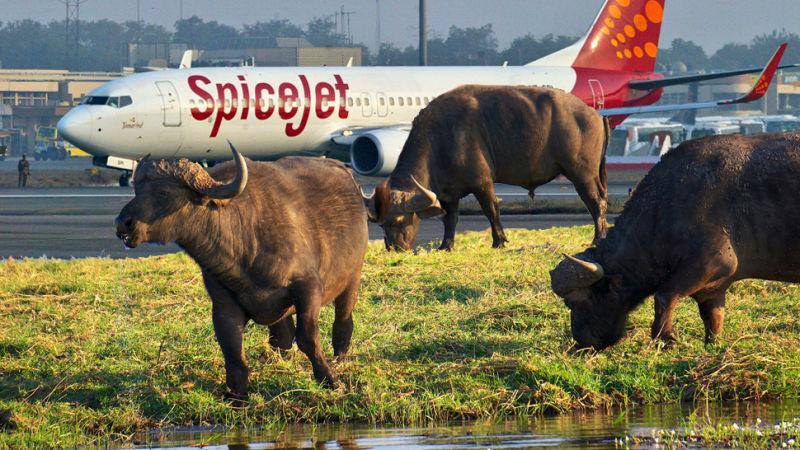 Kura-kura hingga buaya, 7 hewan ini tak terduga bisa tertabrak pesawat