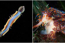 Pria ini jepret 9 makhluk aneh yang hidup di dasar samudera
