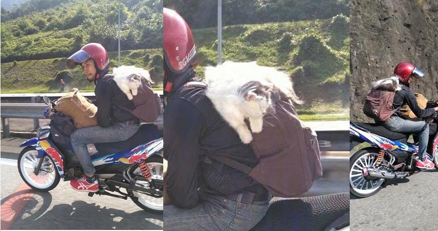 Pemudik ini bawa serta kucing kesayangan pulang kampung, ada-ada aja