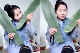 Dikira lidah buaya, vlogger ini ternyata makan tumbuhan beracun
