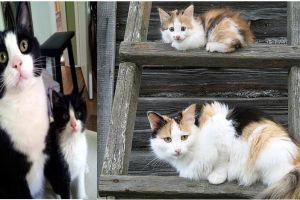 18 Foto kucing bersama induknya ini berpose serasi, bikin gemes dah