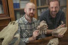 Begini penampakan fosil buaya gigi T-rex, mampu kalahkan dinosaurus