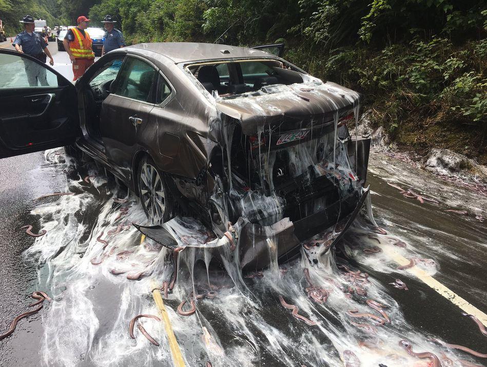Jalanan ini dipenuhi lendir dan belut sebanyak 3.400 kg, kenapa ya?